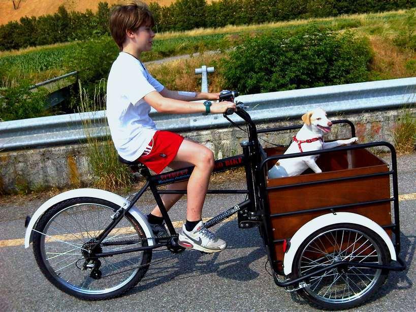 Pony 100 cargo baby per le mamme che portano bambini a scuola - Carrello per bici porta cani ...